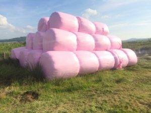 pink bales website
